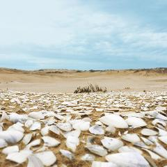 The Untold Story of the Coorong - One of a kind cultural Coorong Beach experience
