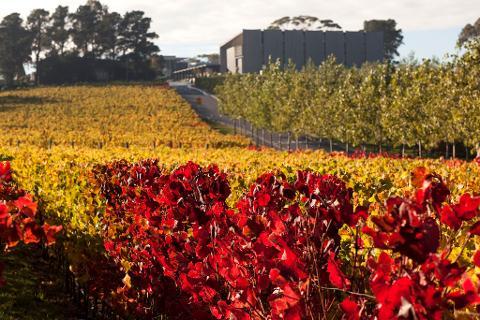Luxury Wine Tour at MONA Hobart – inc bottle of wine Tasmania Australia