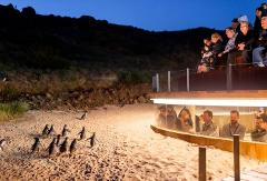 Mornington and Phillip Island - Peninsulas and Penguins