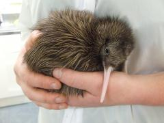VIP Kiwi & Tuatara Backstage Pass - West Coast Wildlife Centre Franz Josef