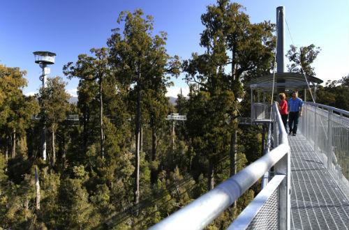 West Coast Tree Top Walkway