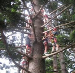Al-Pine Tree Climb 40m high - Including Transfers