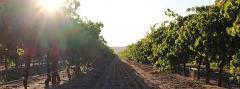 Vines & Wines Tour