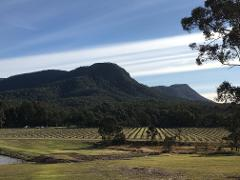 Hunter Valley Private Tour 1 - 7 People