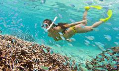 Sunshine Snorkel/Mask/Fins Rental