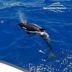 Bremer Canyon Killer Whale Expedition Gift Voucher