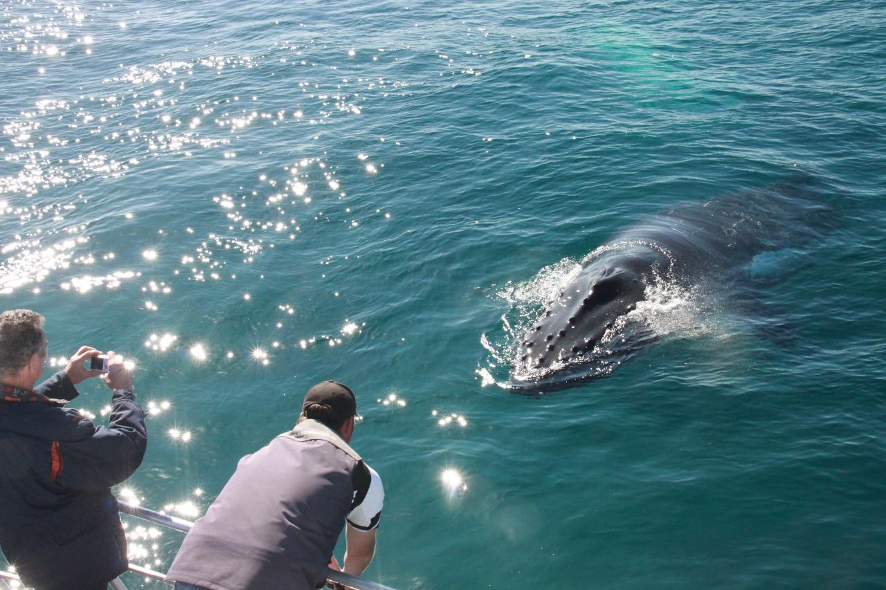 Dunsborough Whale Watching 2pm
