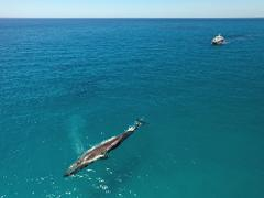 Dunsborough Whale Watching 2pm on board Alison Maree