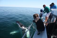 Albany Whale Watching on board Dhu Force