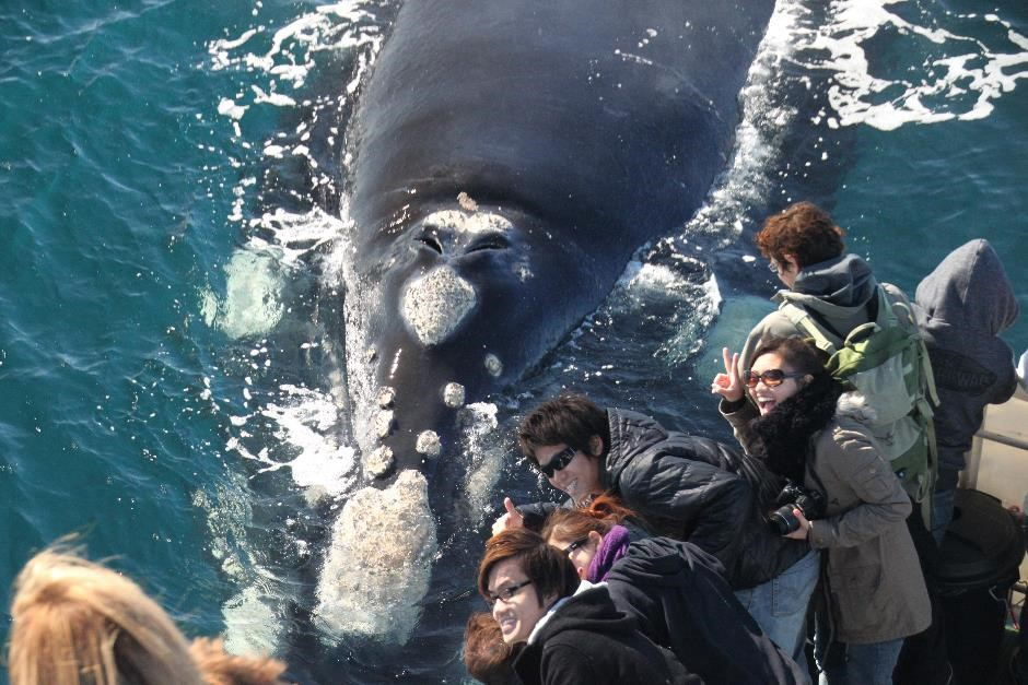 Augusta Whale Watching Gift Voucher