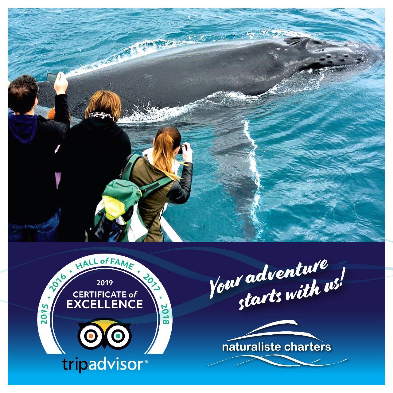 Dunsborough Whale Watching Eco Tours