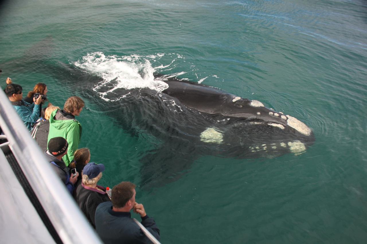 Albany Whale Watching Eco Tours