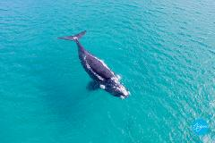 Augusta Whale Watching Eco Tours