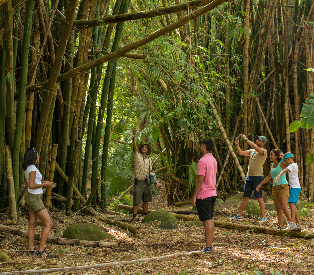 Mauritius Wildlife Foundation Trail - Guided Trek with Ranger