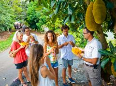 TROPICAL FRUIT WORLD FARM TOUR