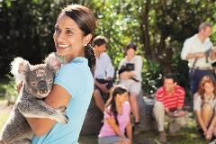Croc Tours Koala Cuddle Adventure (NOOSA/SUNSHINE COAST)