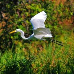 Isleta Nature Tour by Boat with Certified Guide