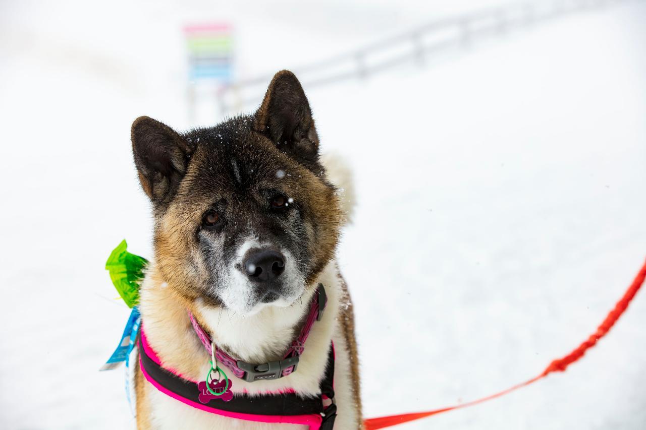 Dog Seasons Pass