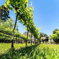 Full Day Mount Tamborine Winery Tour - Gold Coast Pickup - Small Group Tour