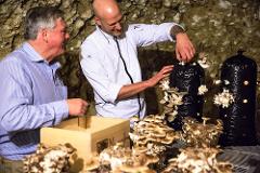 Mushroom Picking Experience