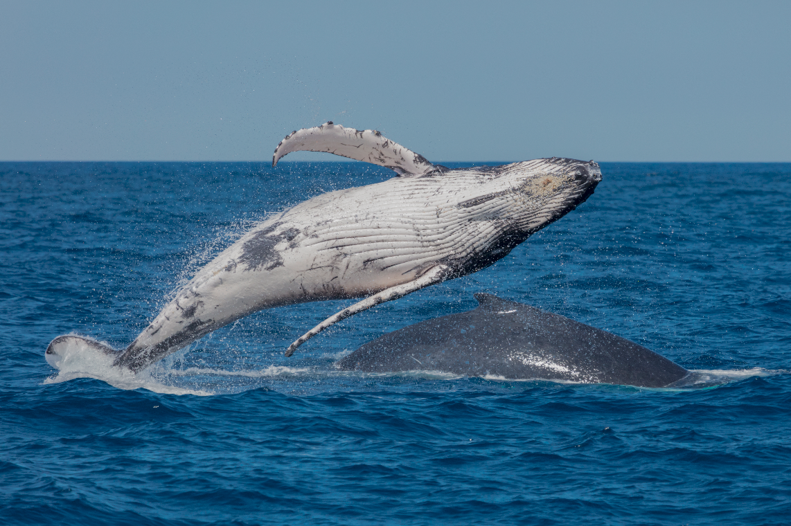 Whale Photography Adventure Workshops