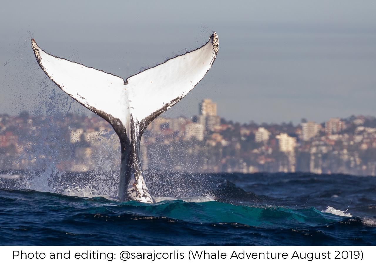 Whale photo and editing Adventure Workshop