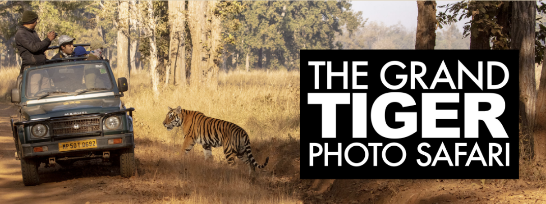 The Grand Tiger PhotoSafari – Information Session