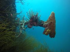 2 Dive Trip - Gotham City and Flinders Reef