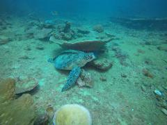 2 Dive Trip - Hutchinson Shoal and Flinders Reef