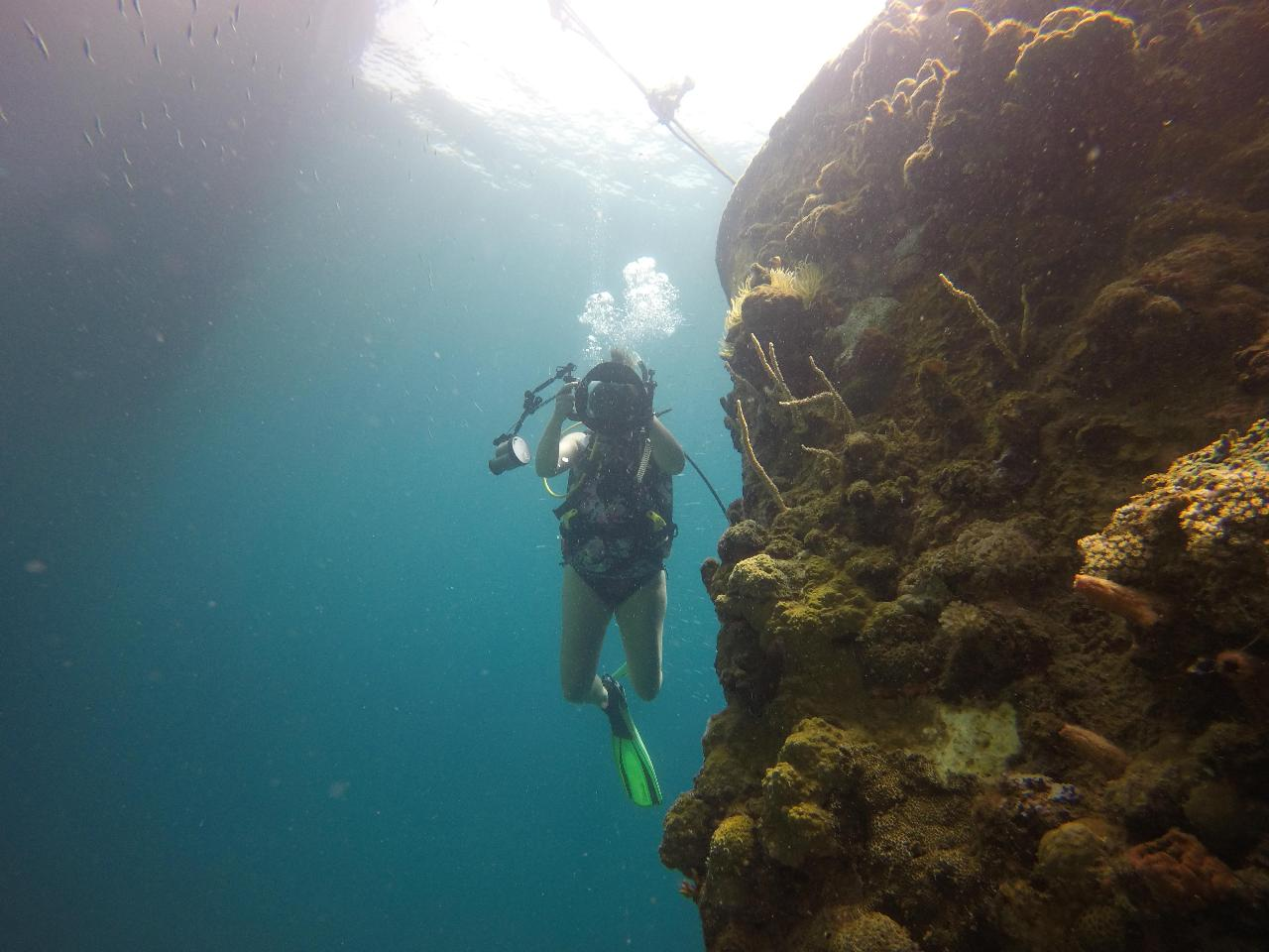 2 Dive Trip - Combi Drop-Off and Curtin Artificial Reef Day Trip