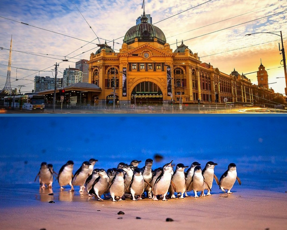 Melbourne City & Penguin Parade Private Tour