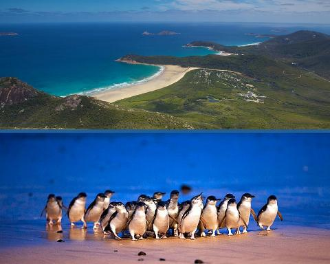 Wilsons Promontory & Penguin Parade – Private Tour