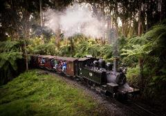 Mt. Dandenong Delights & Puffing Billy Tour