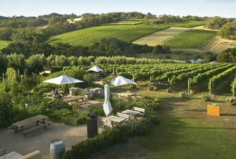 Mornington Peninsula Wineries - Private Tour