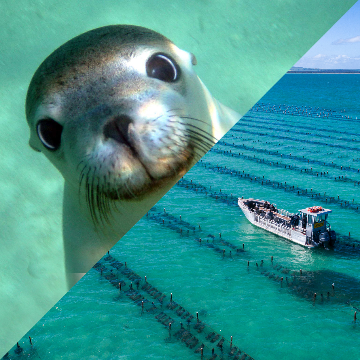 Swim with Sea Lions and Oyster Farm Boat Tour - Full Day Tour