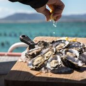 Pure Coffin Bay Oysters - Bay & Farm Tour
