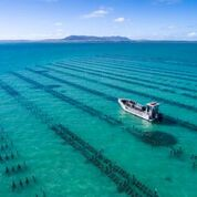Pure Coffin Bay Oysters Farm Crew Tour