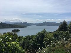 Picton & Marlborough Sounds Scenic Tour 1.5 Hours