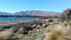 Tekapo Day Excursion