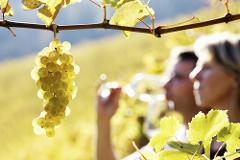 Hunter Valley Wine Tour - Private Tour - Bus & Driver Hire