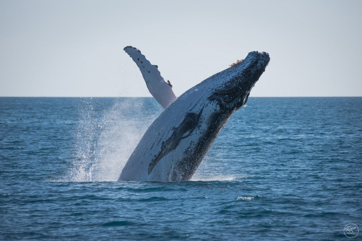 Fraser Island and Whales
