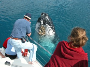 Hummer and Blue Dolphin Whale Watch Tours