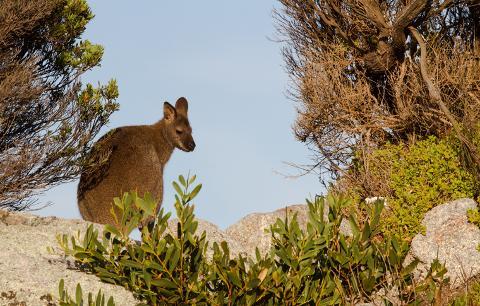 North Eastern Tasmania Voyageur – Full Day Tasmania Australia