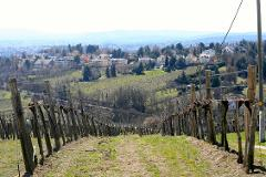 Budapest to Vienna Wine & Sightseeing Tour