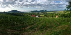 Small-Group Wine Tour to Somló and Northern Balaton