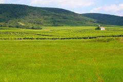 Private Wine Tour to Tokaj