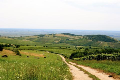 Small-Group Wine Tour to Tokaj