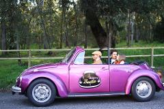 Full-day Sintra Ride by VW Beetle | English