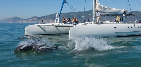 Full-day Dolphin's watch in Setúbal | PT