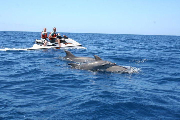 2 Hour Dolphin Safari Adventure